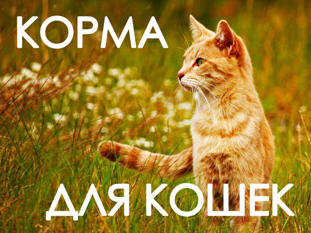 Корма для животных иконка кошка