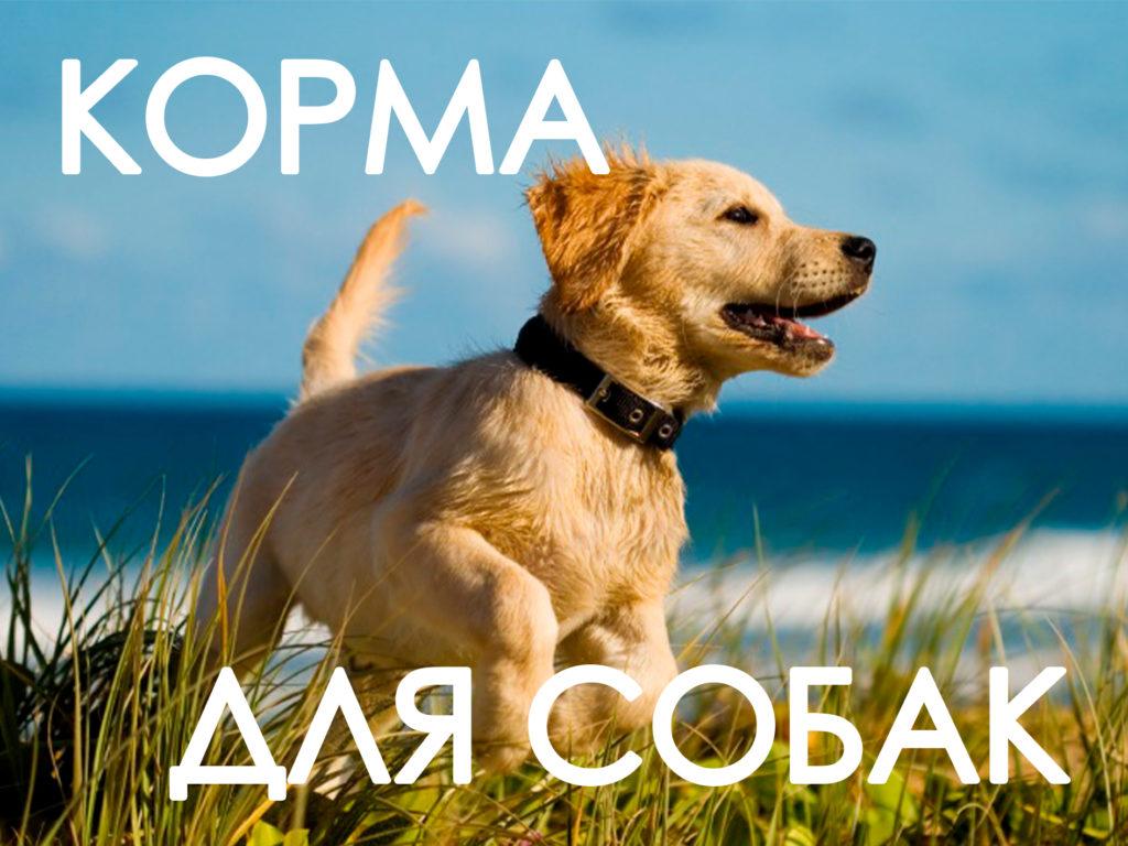 Корма для животных иконка собака